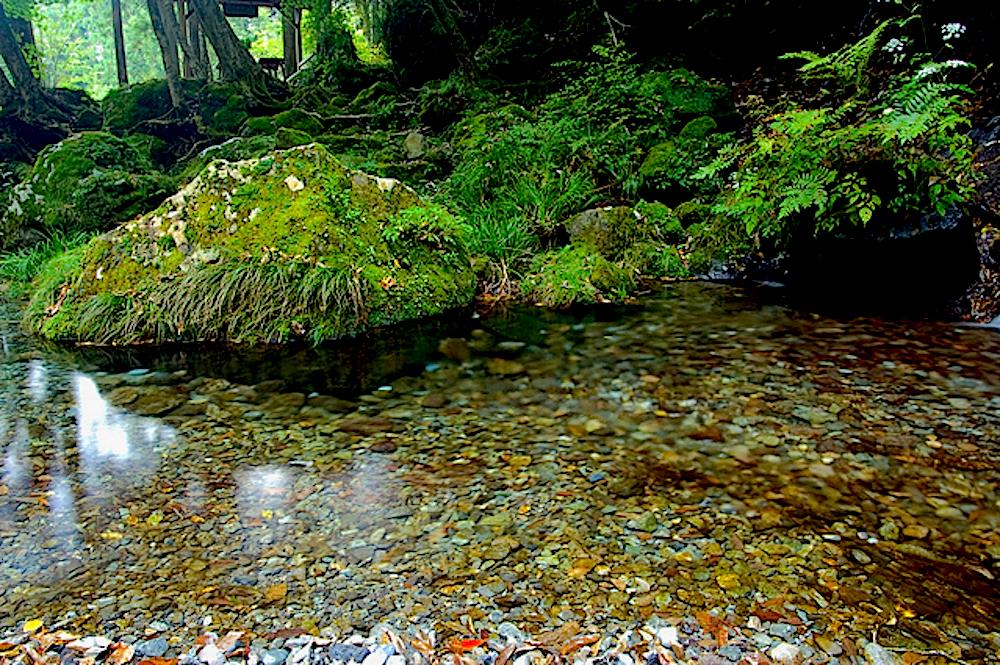 陣馬の滝は五斗目木川の源流になっています