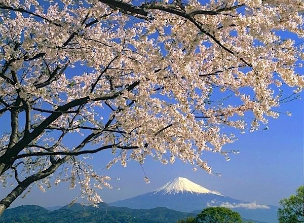 春は桜も開花