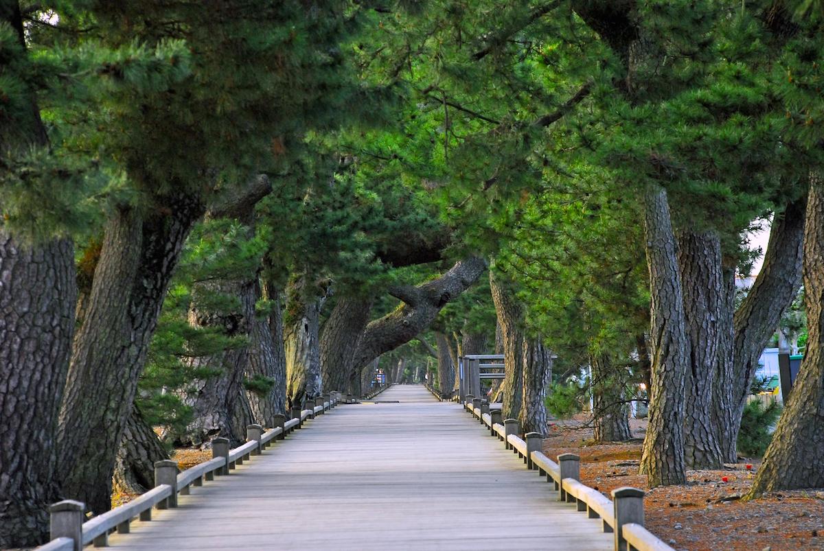 羽衣の松と御穂神社を結ぶ「神の道」