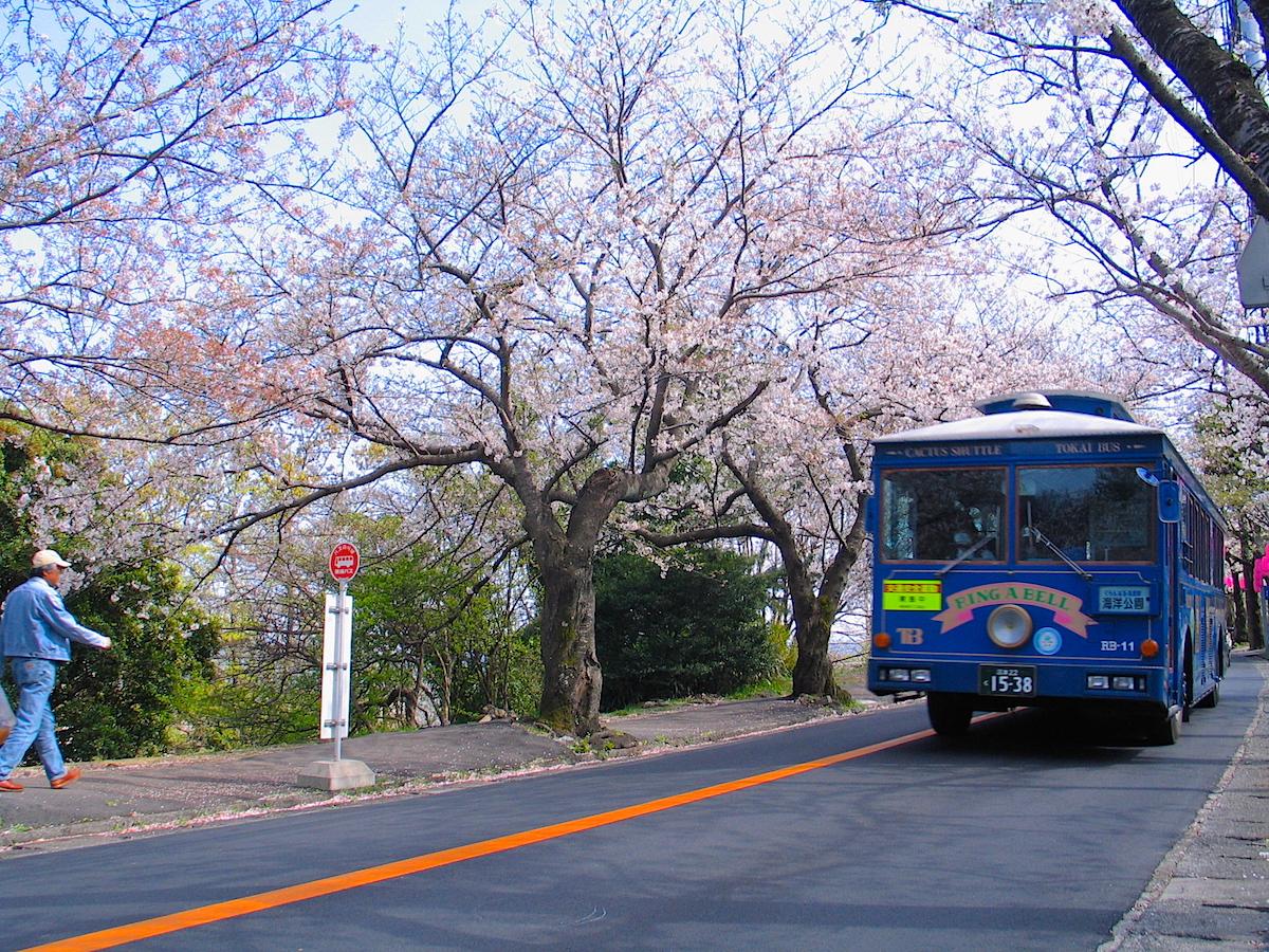 sakuranamiki02
