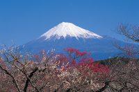 絶景★富士山まるごと岩本山|2019|富士市