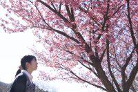 第4回土肥桜まつり|2019